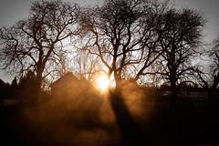 Light and Shadows (FoThoMe) Tags: mist fog sun rising sunrise deutschland germany sonnenaufgang fujifilm xt2 fujinon xf16mm xf16mmf14