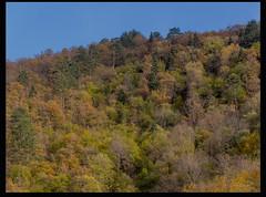 Güz 11 (listera_ovata) Tags: forest tree nature doğa ağaç orman olympusem5 zuiko60mmf28 naturephotography güz autumn fall faunaofanatolia