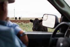 Farmer in Truck Feeding his Wagyu Cattle (kaylasmithphoto) Tags: cowboy cows cattle beef herd animals livestock steer grass texas field pasture agriculture ag farm farming production producing wagyu meat cow animal