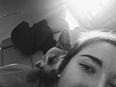 naps (vhickey25479) Tags: blackandwhite naps cute dogs