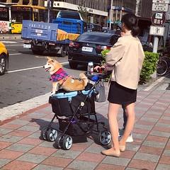 汪醬 #狗 #street #dog  #taiwan (funkyruru) Tags: 狗 street dog taiwan