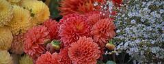Flowers For Sale (Scott 97006) Tags: flowers floral colorful azaleas nature beauty