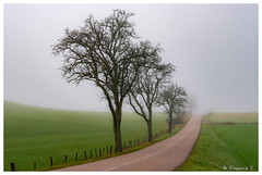 En route vers nulle part (Pascale_seg) Tags: paysage landscape road route nationale hiver winter arbre tree brume brouillard mist misty nebbia countryscape champs moselle lorraine grandest france nikon inverno alberi