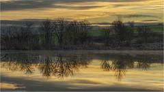 Reflektion (Robbi Metz) Tags: germany bavaria reischenau landscape sunrise sky reflection trees fishpond pond colors sonyilce7m3