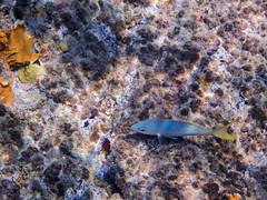 DCL March 2019 Tortola Underwater-59-2.jpg (Rhinodad) Tags: disneycruise disneyfantasy tuesday underwater 2019 dcl tortola britishvirginislands vg