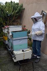 DSC_9745-61 (jjldickinson) Tags: nikond3300 107d3300 nikon1855mmf3556gvriiafsdxnikkor promaster52mmdigitalhdprotectionfilter longbeach bixbyknolls longbeachbeekeepers outreach class beeprepared insect bee honeybee apismellifera hive hiveinspection