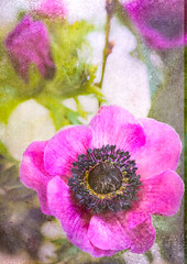 Anemone and texture (judy dean) Tags: judydean 2019 lensbaby texture ps anemone pink flower leaves bud