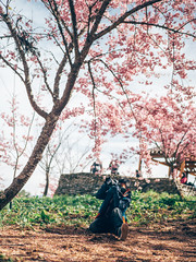 千櫻園|福壽山農場 (里卡豆) Tags: 和平區 臺中市 中華民國 tw olympus 25mm f12 pro olympus25mmf12pro penf olympuspenf