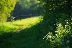 20180505-Canon EOS 6D-8217 (Bartek Rozanski) Tags: mozet namur belgium ardennes belgie belgique ardennen spring chickweed bokeh hiking trail valley morning pasture
