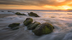Stepping Stones (David Colombo Photography) Tags: windandsea sunset sea ocean pacific hightide tide waves rocks moss algae yellow green seascape landscape davidcolombo d800 davidcolombophotography vibrant sandiego california lajolla color surf sand beach shore clouds