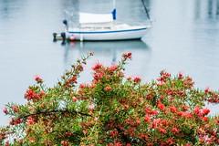 Serenity (Omygodtom) Tags: boat bokeh dof d7100 diamond scene senery nikon70300mmvrlens red river
