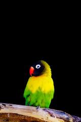 Neon life. (Snap.off) Tags: fantasticnature birding naturephotography naturephotographer nature colorful hotcolors colorpop colors sonyalpha sonyemount 70200f4 sonya6000 nationalgeographic ngc animalplanet wildlife wildlifeanimal zoo birds bird