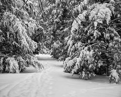 TowerGrovePark_SAF4918 (sara97) Tags: copyright©2019saraannefinke missouri photobysaraannefinke saintlouis towergrovepark towergrovepark2019 winter winter201819 snow monochrome bw blackandwhite blackwhite