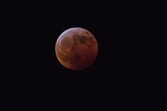 Supermoon Lunar Eclipse (stargazerpearce) Tags: blood moon lunar eclipse 2019 super wolf supermoon lunareclipse bloodmoon