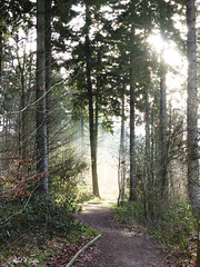 Inviting (mark.griffin52) Tags: england buckinghamshire wendoverwoods countryside sunshine sunlight mist woodland forest trees