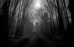 Fog (Dave.Miles) Tags: olympus olympusom10 zuiko 24mmzuiko redfilter ilford ilfordfp4plus analogue film filmisnotdead 35mm 35mmfilm wombourne woods fog staffordshire