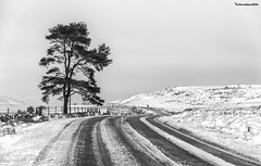 Snowy Hirwaun to Brecon pass (technodean2000) Tags: ©technodean2000 lr ps photoshop nik collection nikon technodean2000 flickr photographer d810 wwwflickrcomphotostechnodean2000 www500pxcomtechnodean2000 brecon snow road sky tree mountain south wales uk welsh lightroom flick photo