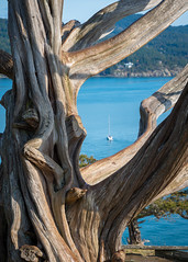 Old Growth by the Bay (s.d.sea) Tags: sail sailboat boat tree trunk old growth wood texture water ocean san juan islands anacortes washington washingtonstate wa pnw pacificnorthwest northwest afternoon pentax k5iis 2470mm spring focus depth field