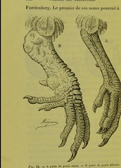 This image is taken from Page 152 of Les acariens parasites [electronic resource] (Medical Heritage Library, Inc.) Tags: acari arachnid vectors wellcomelibrary ukmhl medicalheritagelibrary europeanlibraries date1892 idb20406186