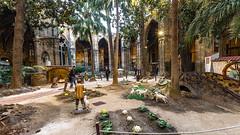 Barcelone-145 (bonacherajf) Tags: barcelona barcelone catalogne catalunya espagne espania spagna cloitre oies cathédrale crèche