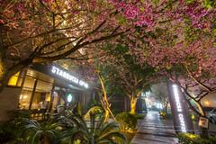 さくらスターバックス (湯小米) Tags: canon 6d taiwan flower spring sakura ef1635mmf28l 新北市 林口區 櫻花 星巴克