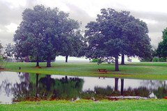 Twin Reflections (Heather's Reflections Photography) Tags: trees reflection reflections pond tree reflect water nature oklahoma outdoor outside plants grass green tulsa midwest misty foggy clouds cloudy grey gray hills rolling bench peaceful relaxing landscape still rural country countryside