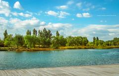 park in autumn (gwnam.2008) Tags: park lakepark forest forestpark autumn summer tree green greenery greencolor lake lakeside water sangamdong mapogu mapo seoul 상암동 마포구 서울 korea
