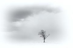 Là-haut, le silence (Nicole Barge) Tags: arbre tree neige snow seul solitaire montagne mountain alone blanc white blackandwhite noiretblanc 2018 nicolebarge