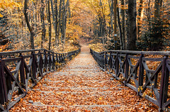 (DianePL) Tags: autumn colours colors colorful outdoor orange forest natura nature nikon nikkor landscape leaf tree travel trees track stairs poland polska jesień d5100 peaceful