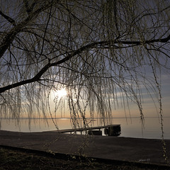 #The Ancient Friendship Between The Willow And The Stream (graceindirain) Tags: weepingwillow lake trasimenolake umbria italy sunset graceindirain