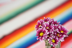 Colorful days (1jonathan1) Tags: colorful color flower flowers lines nature design