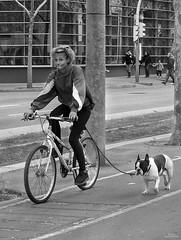 Paseando (vitometodio) Tags: bicicleta bike perro dog callejeando streetphoto streetphotography bnw bnwcity olympus urbanphotography fotografiaurbana streetshots street fotodecalle streetphotobw calle bcn blancoynegro urbanstreet blackandwhite blackandwhitephotography vitometodio olympusomdem5markii olympusmzuikodigitaled1240mmf28