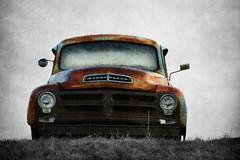Stud of a Studebaker (David Sebben) Tags: studebaker pickup truck abandoned iowa texture rust patina vintage stud