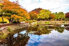 Autumn reflections in Tumuli Park (patuffel) Tags: gyeongju tumuli park south korea pond reflection autumn foliage 2018 leica m10 28mm summicron unesco world heritage