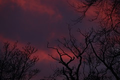 Sunrise after Lunar Eclipse (@FunkyAppleTree) Tags: sunrise moon eclipse dawn daybreak break day morning sky dramatic colours colourful trees tree branches lunar january 2019