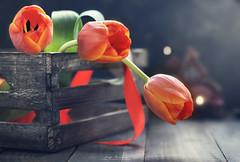 """""""Trio of tulips"""" (mariajoseuriospastor) Tags:"""