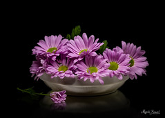 Violet daisies (Magda Banach) Tags: canon canon80d sigma150mmf28apomacrodghsm blackbackground bud colors daisies flora flower macro nature plant plants porcelain reflection violet