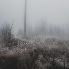 In the Fog II  /06 (KromOner) Tags: kromoner art design minimal dark nature forest trees woods silent solitude silence mood atmosphere quiet canon austria fog foggy mist misty lucid
