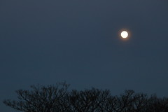 Spring Supermoon,Aberdeen_Mar 19_408 (Alan Longmuir.) Tags: grampian aberdeen misc sky moon springsupermoon