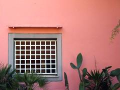IMG_4679 -  pink (molovate) Tags: finestra window color tafme finestrainrosa palmanana volate pala ficodindia canon powershot a620 molovate