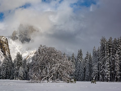Cook's Meadow, Yosemite Winter_ (Basak Prince Photography) Tags: california elcapitan fall geographicfeatures nationalpark places plants usa waterfall yosemitenp america beautiful beauty blue capitan clouds cold color dome el falls forest granite grass green half hiking ice landmark landscape mountain mountains national natural nature outdoor outdoors panorama park pine river rock scenery scenic sky snow storm summer sunrise sunset tourism tourismtravel travel tree trees valley view water white wilderness winter yosemite yosemitenationalpark yosemitevalley