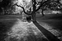 Dolce sera (Roberto Spagnoli) Tags: love young fotografiadistrada streetphotography controluce backlight tree park bicycle bicicletta people biancoenero blackandwhite bw couple lovers evening