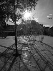 Noël en octobre (Le Lutin d'Ecouves) Tags: boule soleil monochrome arbre place