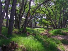 walking along the trails at TuziRAP (EllenJo) Tags: tuzirap tuzigootriveraccesspoint clarkdalearizona verderiver april2019 april 2019 pentaxqs1 ellenjo springtimeinarizona springtime green verdevalley clarkdale az riparian