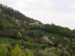 éledő domboldal / spring hillside (debreczeniemoke) Tags: tavasz spring erdő forest rét meadow domb hill fa tree virág flower zöld green fehér white felhős cloudy olympusem5