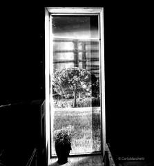 """Life is out"" (carlomarchetti62) Tags: carlomarchetti photography art artstudio autumn cityjungle contemporaryart dream empathy freedom heart house infinity intothewild insideout love life lifestyle light nature new present rome transformation soul spirituality world bnwworkers bnwartstyle bnwplanet2018"