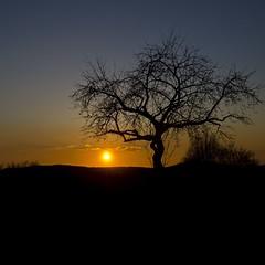 Sunset Silhouette ☀️🍁🌳 (Martin Bärtges) Tags: hügel hill outside outdoor drausen blau himmel blue sky silhouette baum tree landschaftsfotografie landscapephotography landscapelovers landschaft landscape nikonphotography nikonfotografie d7000 nikon sonnenuntergang sonnenschein sonne sunset sun sunshine