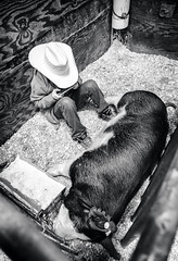 boy with pig (Jen MacNeill) Tags: pa pennsylvania pennsylvaniafarmshow farm show agriculture bnw bw blackandwhite farming animals pigs porcine swine kids children 4h