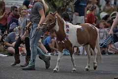Miniature Horse On Parade (Scott 97006) Tags: horse miniature cute parade street jeans girl crowd