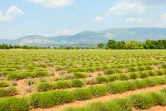 DSC_9607-14-18 (aehnattapol) Tags: france lavender building shop landscape uk england europe eifel farm blue sky green